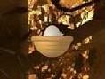 Springendes Ei