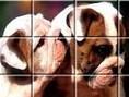 Hunde-Puzzle