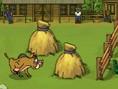 Wildschwein Rennen