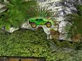 Truck im Dschungel