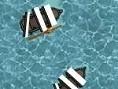 Los veleros negros