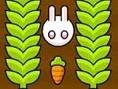 Jardín de zanahorias