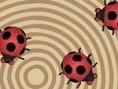 Ladybug Meeting