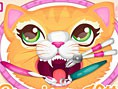 Kedi Dişçide