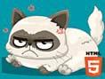 Neue Kostenlose Quizspiele spielen What Famous Cat are you? - In diesem witzigenQuizspiel find