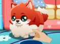 My Cute Pom Puppy