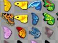 Kyodai- Schmetterlinge