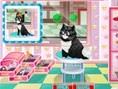 Cat Salon
